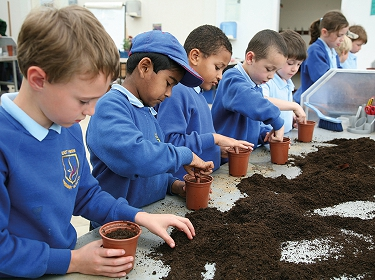 East Sheen Primary School pupils planting seeds in the Clore Learning Centre at RHS Wisley © RHS/Fiona Secrett