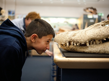Face-to-face in the Clore Natural History Centre at the World Museum, Liverpool © Mark McNulty (conf.)